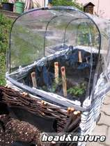 Greenhouse dome - Salad planter #0