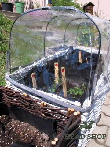 Greenhouse dome - Salad planter
