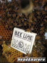 Bee Line regular #2